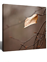 VISUAL STAR® Till the End of Life - Autumn Leaf Stretched Canvas Wall Art Ready to Hang