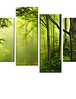 VISUAL STAR®Summer Forest Stretched Canvas Painting For Home Decoration Room