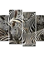 pittura ad olio visivo star®high zebra qualità animale su tela pronti da appendere