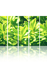 VISUAL STAR®Green Leaf Group Canvas Painting Art Modern Decor Wall Canvas Ready to Hang