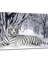 VISUAL STAR®Tiger Animal Canvas Painting Art Winter Snow Stretched Canvas Printing