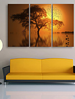 E-HOME® Stretched Canvas Art Tree Under The Setting Sun Decoration Painting  Set of 3