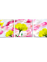 VISUAL STAR®Beautiful Flower Canvas Wall Art Printing Ready to Hang