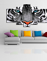 VISUAL STAR®Black and White Wild Tiger Animal Canvas Set of 5 High Quality Canvas Ready to Hang