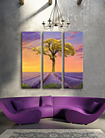 E-HOME® Stretched Canvas Art Purple Flowers And Trees Decorative Painting  Set of 3