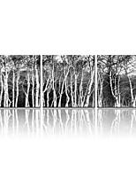visuelle star®black und weiße Segeltuchwandkunst Baum Leinwanddruck Satz von 3 fertig zum Aufhängen
