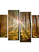 visuell STAR®-storlek 4 paneler inramade grupp duk vägg konst redo att hänga