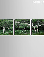 E-HOME® Stretched Canvas Art Woods Decorative Painting Set of 3
