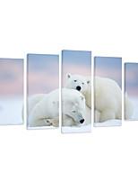 star® visual 5 piezas Lienzos oso animales polares para la decoración de Navidad, listo para colgar