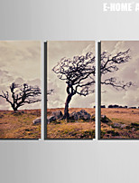 E-HOME® Stretched Canvas Art Withered Tree Decoration Painting Set of 3