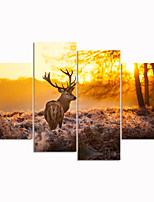 VISUAL STAR®Sunset Picture Digital Print On Canvas Deer Animal High Auality Stretched Canvas