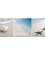 VISUAL STAR®Beach Sand Picture Digital Print On Canvas Shell Photo Wall Art Ready to Hang