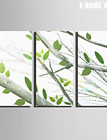 E-HOME® Stretched Canvas Art On The Tree's Leaves Decoration Painting Set of 3