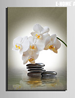 E-HOME® Stretched Canvas Art Stone And White Flowers Decorative Painting One Pcs