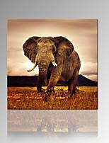 Animali / Fotografia / Moderno / Romantico / Pop art Print Canvas Un pannello Pronto da appendere , Quadrato