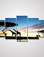 Animal / Ocio / Paisaje / Botánico / Fotográfico Impresión de la lona Cinco Paneles Listo para colgar , Horizontal