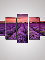 Vrije tijd / Landschap / Botanisch / Fotografisch / Romantisch Canvas Afdrukken Vijf panelen Klaar te hangen , Horizontaal