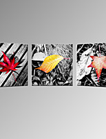 VISUAL STAR®Fallen Leaves Canvas Wall Print 3 Panel Home Decor Canvas Wall Artwork Ready to Hang