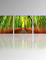 Ocio / Paisaje / Fotográfico / Patriótico / Moderno / Romamticismo / Pop Art / Viaje Impresión de la lona Tres Paneles Listo para colgar ,
