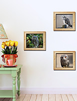 Set of 3 Owl Wall Stickers Art Decals