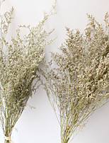 Dried Flowers Dried Fruit Specially Made By Hand Dried Flower Others Artificial Flowers
