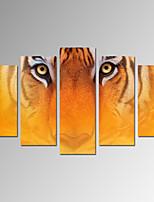 Dieren / Fantasie / Fotografisch / Vaderlandslievend / Modern / Romantisch / Pop Art / Reizen Canvas Afdrukken Vijf panelenKlaar te