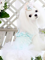 Perros Abrigos Azul Verano Moda
