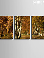 E-HOME® Stretched Canvas Art Roads In The Woods Decoration Painting  Set of 3