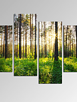 VISUAL STAR®Sunlight in Forest Landscape Picture Print on Canvas for Home Decoration Ready to Hang