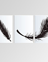 VISUAL STAR®Modern Feather Canvas Print Wall Art for Living Room Decor Ready to Hang