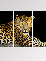 VISUAL STAR®Leopard on Black Background Canvas Art Modern Home Decoration Artwork Ready to Hang
