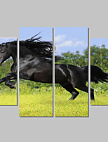 Canvas Set Of 4 Abstract Print Painting On The Wall Home Decor Horse Pictures