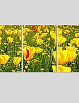 Animal / Paisagem / Moderno Impressão em tela 3 Painéis Pronto para pendurar,Quadrada