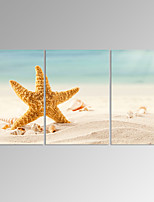 VISUAL STAR®Stretched Starfish on Beach Canvas Print Seascape Wall Art Ready to Hang