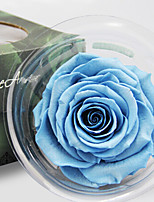 Roses Preserved Fresh Flowers Multicolor Optional 1pc/set