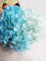 Gradient Hydrangea Preserved Fresh Flowers
