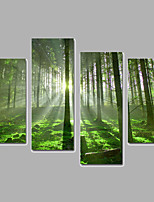 Landscape / Botanical Canvas Print Four Panels Ready to Hang,Any Shape(No Frame)