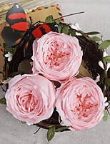 4-4.5cm Eight Pink Austin Roses/Box Bicolor Preserved Fresh Flowers