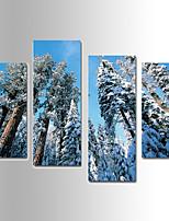 Landscape / Botanical Cedar Canvas Print Four Panels Ready to Hang,Any Shape(No Frame)