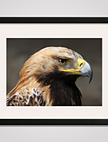 Framed Canvas Print Art The Head of Eagle 16x20inch for Modern Wall Decoration Ready To Hang