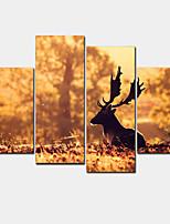 Moderno Print Canvas Quattro Pannelli Pronto da appendere,Orizzontale