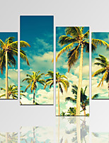 VISUAL STAR®Seascape Palm Tree Picture Print on Canvas with Wood Frame Natural Landscape Art Print Ready to Hang