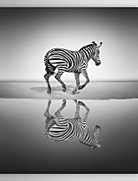 Animal Sea of Freedom by Ben Heine Canvas Print From Ready to Hang 7 Wall Arts®
