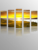 Sundown Grassland on Canvas wood Framed 5 Panels Ready to hang for Living Decor