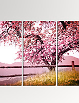 VISUAL STAR®3 Pieces Cherry Blossom Trees Wall Art with Wood Frame Giclee Canvas Artwork Ready to Hang