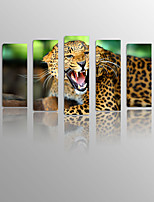 Angry Leopard on Canvas Wood Framed 5 Panels Ready to hang for Living Decor