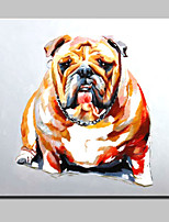 Lager Hand Painted Animal Friends Dog Oil Painting On Canvas Wall Art Picture Home Decor Whit Frame 100x100cm