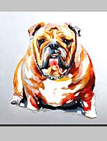lager handgemalte Tierfreunde Hundeölgemälde auf Leinwand Wandhauptdekor Whit Rahmen Kunstbild 100x100cm