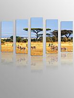 Canvastaulu Maisema / Asetelma / Eläin / Leisure Moderni / Classic / Välimeren / European Style,5 paneeli Kanvas Pysty PanoramicTulosta
