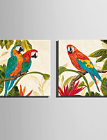 Mini Size E-HOME Oil painting Modern Colorful Parrot Pure Hand Draw Frameless Decorative Painting